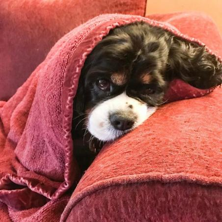 After a cold snowy walk, she is a snuggle pup.